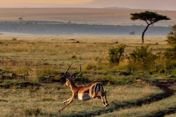 Antelope on the Kenyan Plains