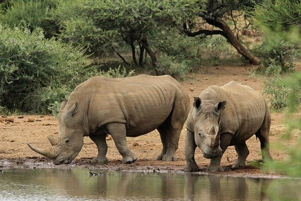 White Rhino Africa
