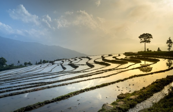 rice-field-Vietnam