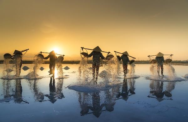 salt-harvesting-Vietnam