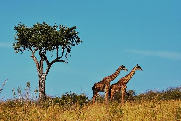 wildlife-Tanzania